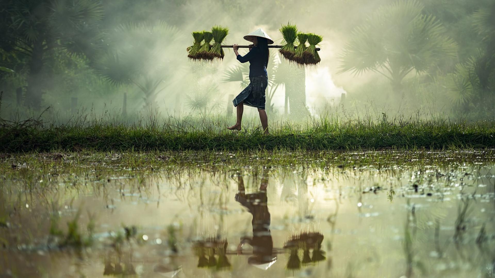Le voyage en Asie ou comment obtenir un dépaysement total