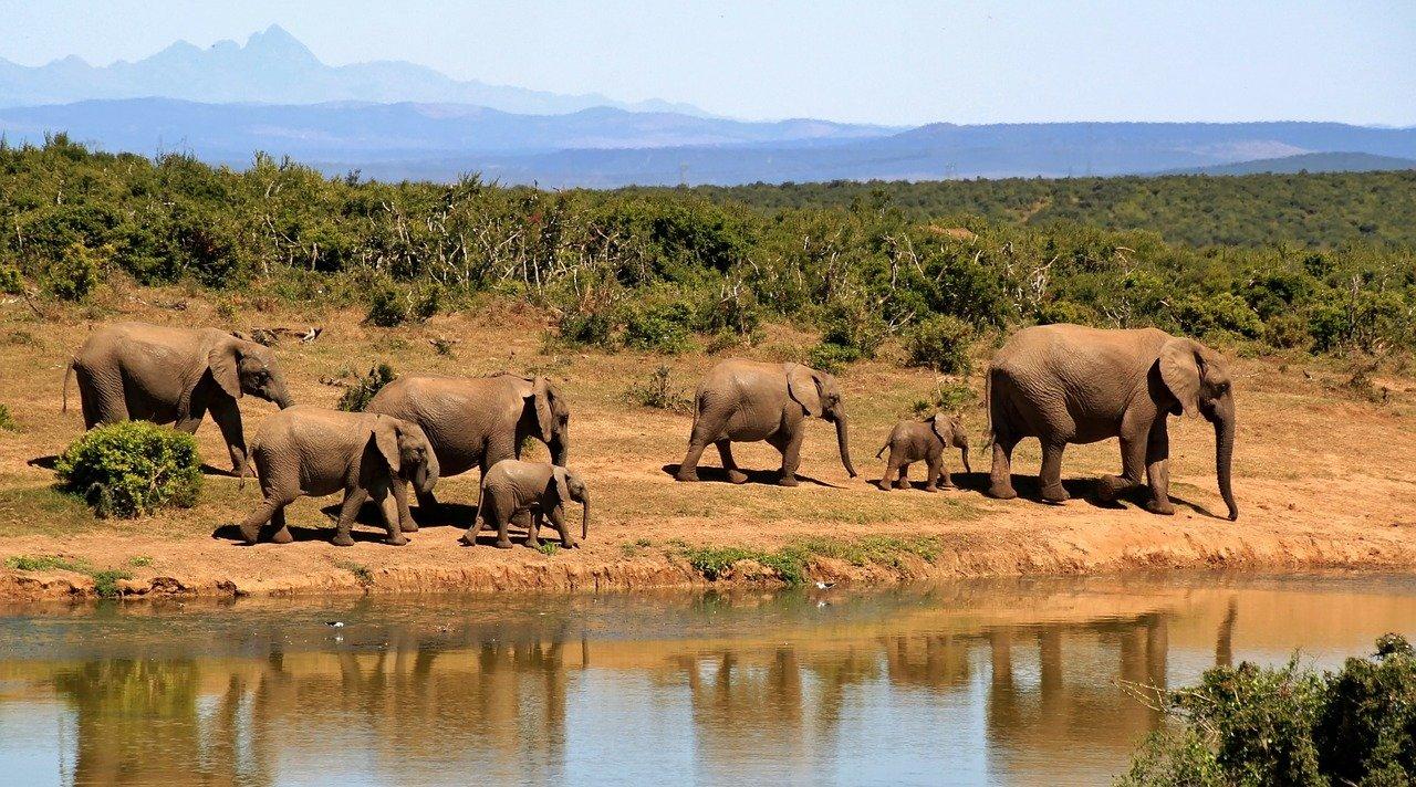 Les endroits à découvrir pendant un voyage en Afrique