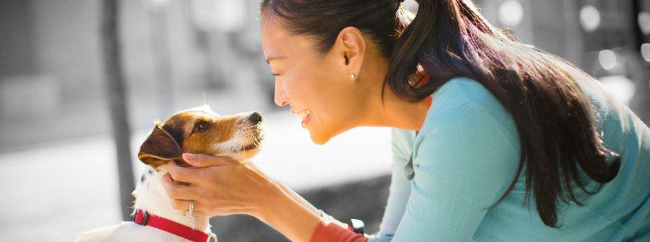 Les divers soins nécessaires au bien-être de votre chien