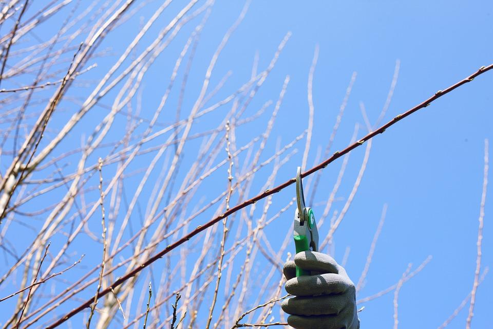 Utiliser un coupe-branche dans un travail de jardinage : Oui ou non ?